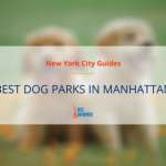 Best Dog Parks in Manhattan: 10 Best Off-Leash Dog Parks and Runs in NYC